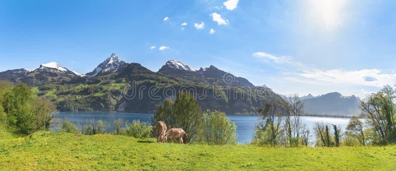 Paesaggio alpino svizzero con le alpi immagine stock