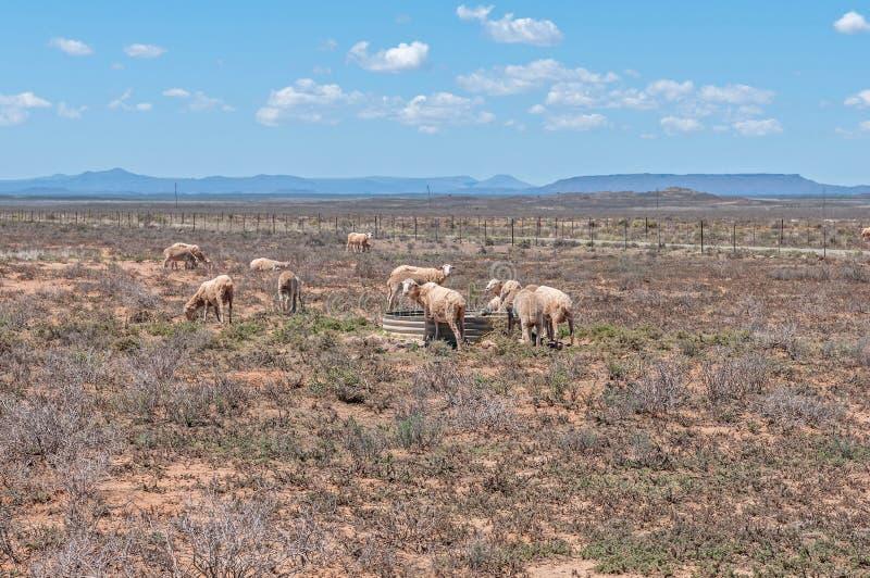 Paesaggio arido tipico di karoo immagini stock libere da diritti