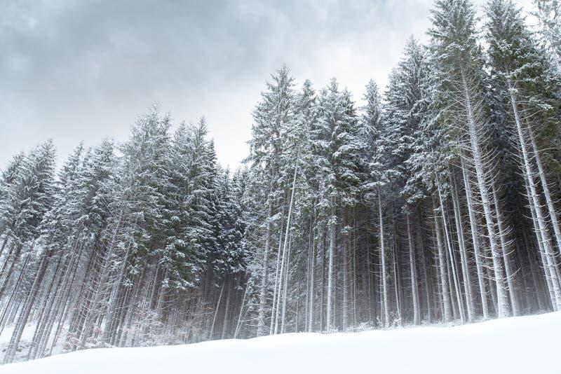 Paesaggio atmosferico della foresta di inverno fotografie stock libere da diritti