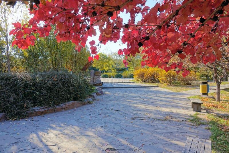 Paesaggio autunnale del parco immagini stock libere da diritti
