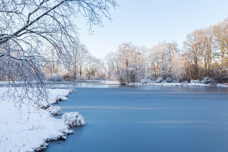 Paesaggio bianco di inverno in giardino con gli alberi e lo stagno congelato fotografia stock