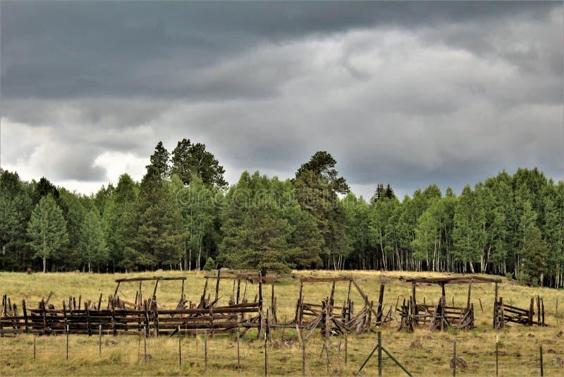 Paesaggio bianco di prenotazione di Apache delle montagne, Arizona, Stati Uniti fotografia stock libera da diritti