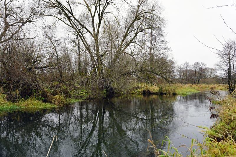 Paesaggio bielorusso Il fiume Gaina in autunno a novembre immagine stock libera da diritti