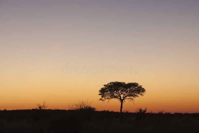 Paesaggio Botswana fotografia stock libera da diritti