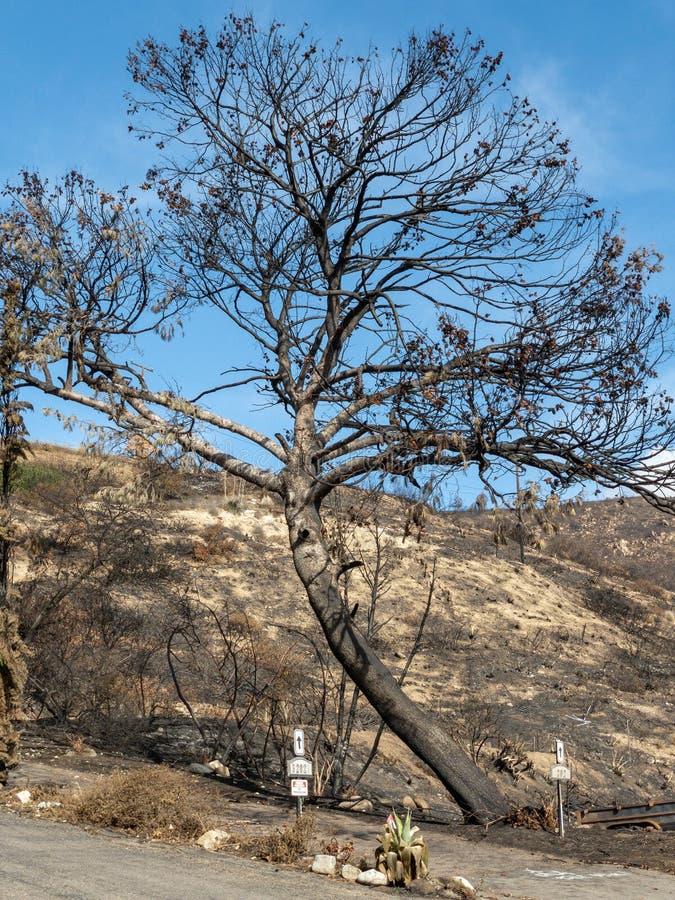 Paesaggio bruciato - Malibu, California fotografie stock libere da diritti