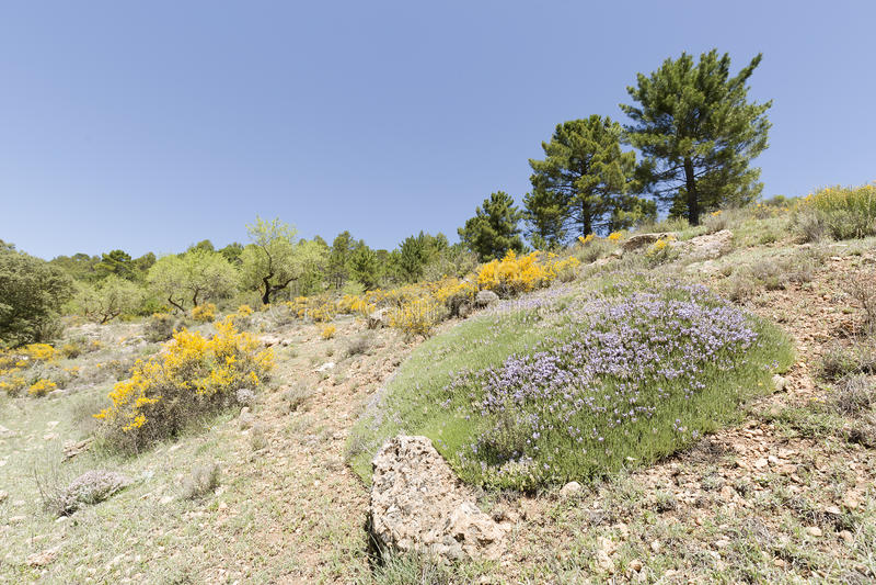 Paesaggio in Cañadas de Haches de Arriba immagine stock