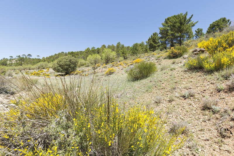 Paesaggio in Cañadas de Haches de Arriba immagini stock