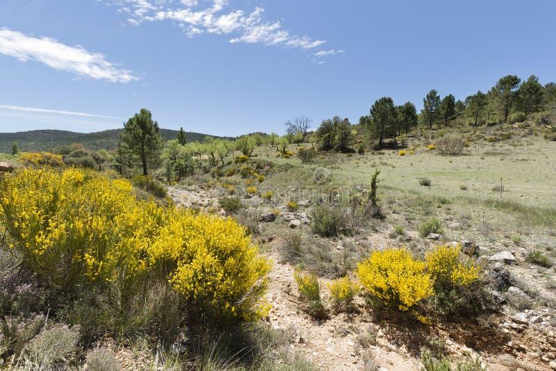 Paesaggio in Cañadas de Haches de Arriba immagini stock libere da diritti