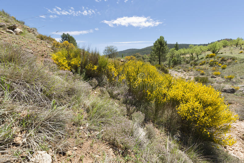 Paesaggio in Cañadas de Haches de Arriba immagine stock libera da diritti