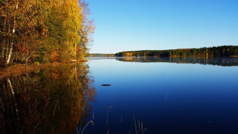 Paesaggio calmo La foresta sta riflettendo dall'acqua fotografie stock libere da diritti