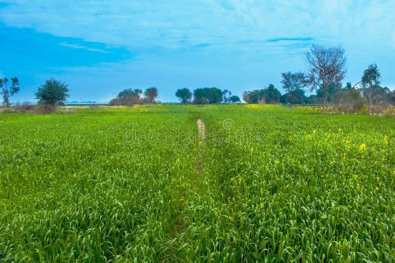 Paesaggio, campi verdi con cielo blu fotografie stock libere da diritti