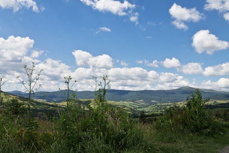 Paesaggio carpatico di estate immagine stock