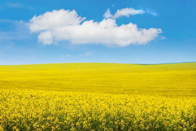 Paesaggio che sovrasta il campo di colza giallo e le pittoresche nuvole bianche nel cielo azzurro_ fotografia stock libera da diritti