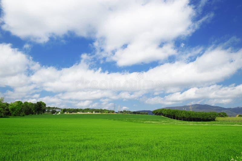 Paesaggio coltivato Peri in un campo verde fotografie stock