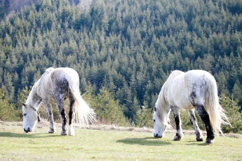 paesaggio con due bei cavalli fotografia stock libera da diritti