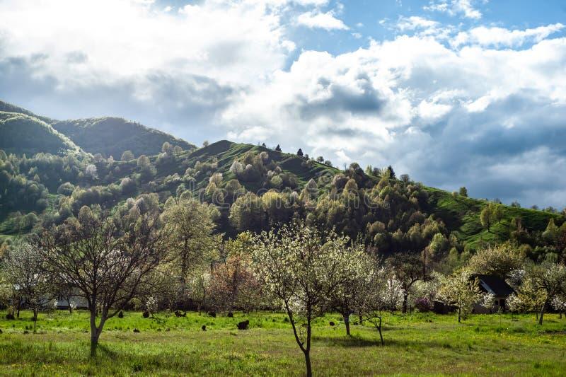 paesaggio con erba verde, le colline e gli alberi, tempo soleggiato, cielo nuvoloso fotografia stock libera da diritti