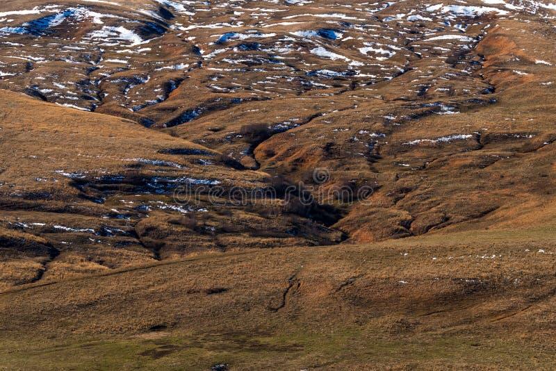 Paesaggio con gli abeti e una certa neve nella foresta della montagna in autunno fotografia stock