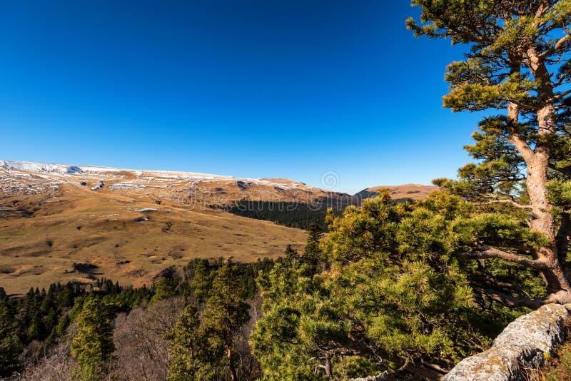 Paesaggio con gli alberi nella foresta della montagna in autunno fotografia stock libera da diritti