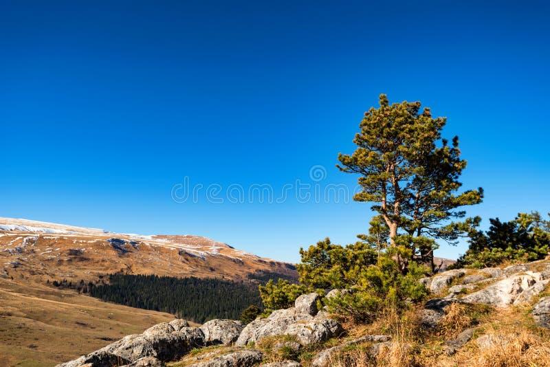 Paesaggio con gli alberi nella foresta della montagna in autunno immagine stock
