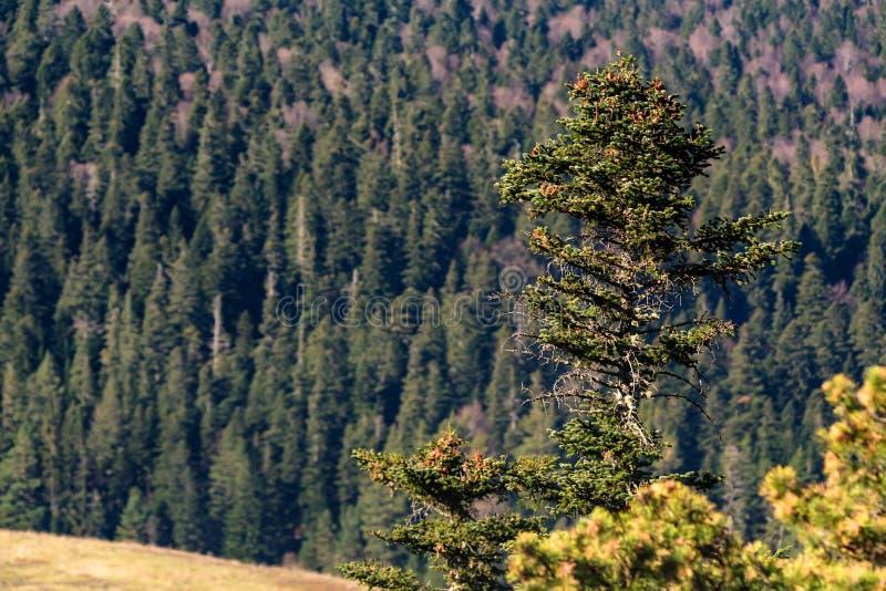 Paesaggio con gli alberi nella foresta della montagna in autunno fotografia stock