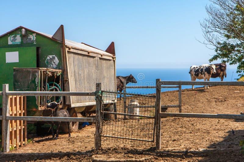 Paesaggio con i punti di vista dell'azienda agricola, della capanna dall'automobile ferroviaria e del bestiame fotografia stock libera da diritti