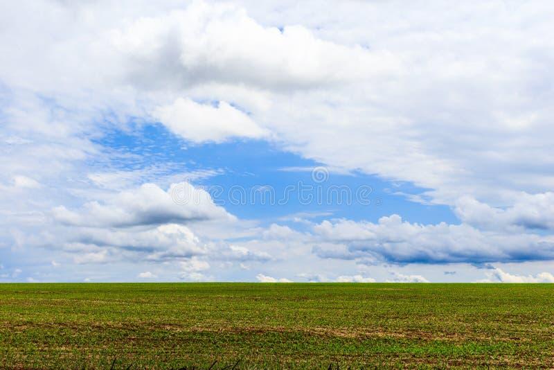 Paesaggio con il campo delle piante di soia in cielo blu Il Brasile, Sudamerica fotografia stock libera da diritti
