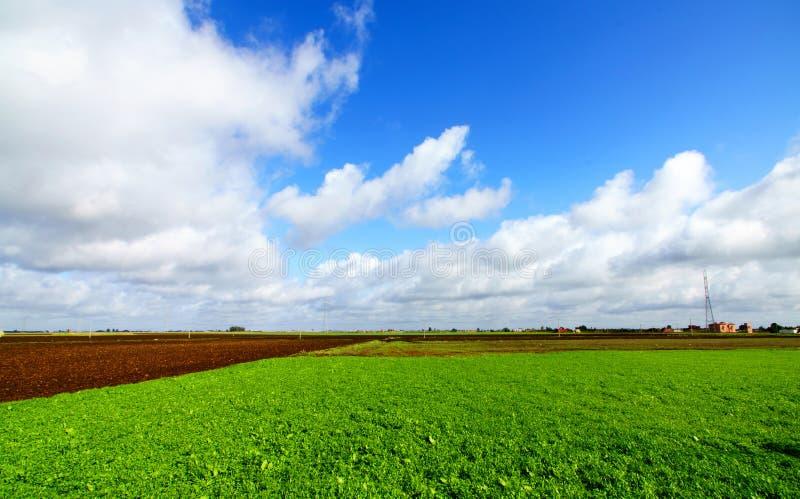 Paesaggio con il campo ed il cielo blu di erba verde fotografie stock