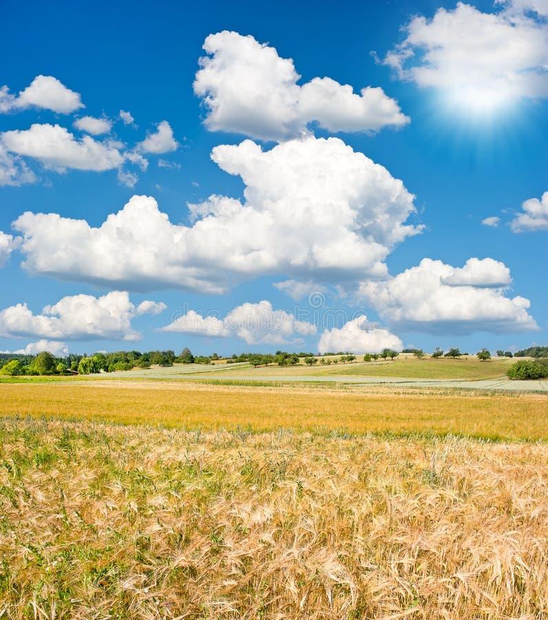 Paesaggio con il campo ed il cielo blu di frumento fotografie stock libere da diritti