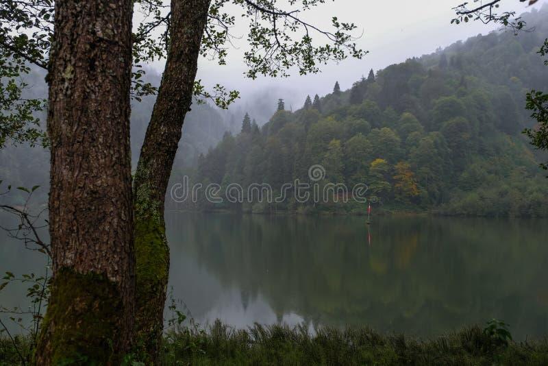 Paesaggio con il lago e la foresta nebbiosa in montagne fotografia stock