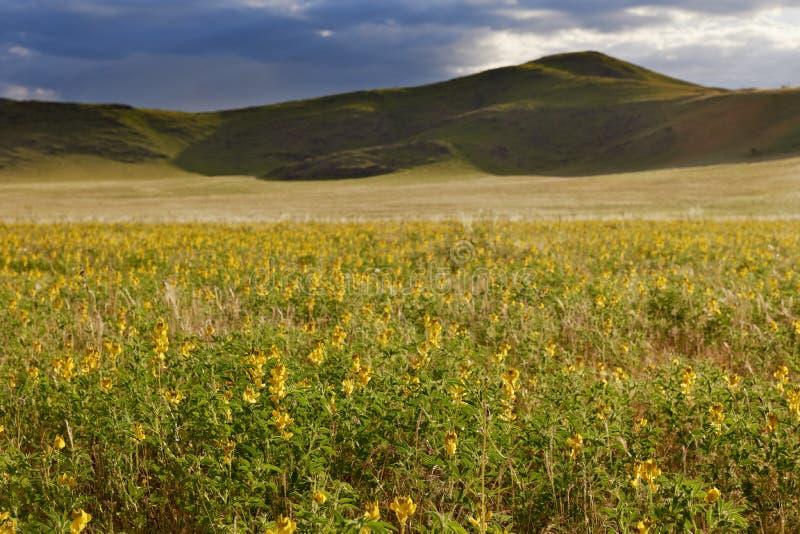 Paesaggio con il mar Giallo dei fiori immagini stock libere da diritti