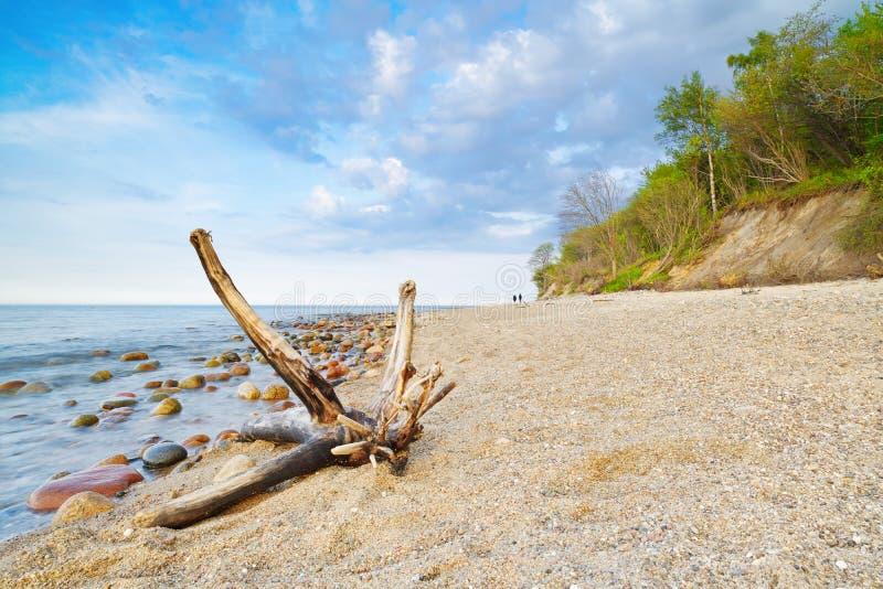 Paesaggio con il tronco sulla spiaggia Costa del Mar Baltico fotografia stock