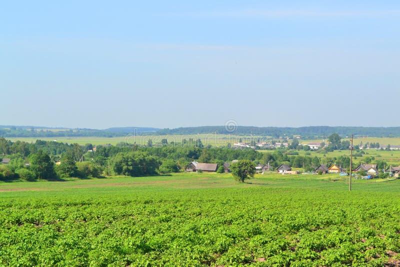 Paesaggio con il villaggio in Bielorussia Iarda del paese con le vecchie case di ceppo immagine stock libera da diritti