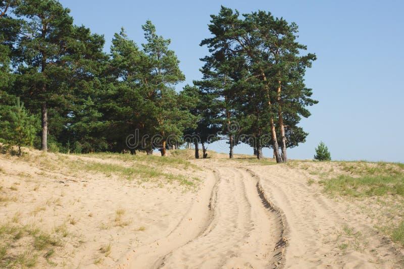 Paesaggio con l'abetaia e la strada sabbiosa Punto di vista rurale del cen fotografia stock libera da diritti