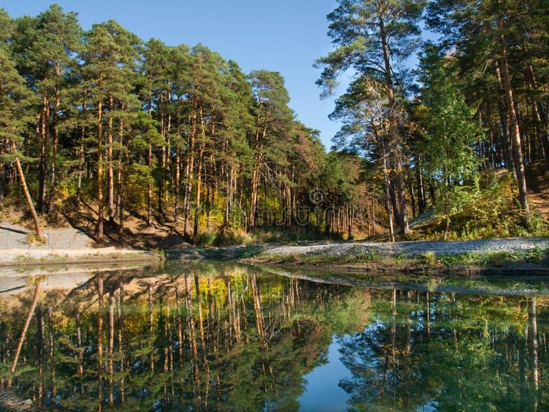 Paesaggio con l'abetaia ed il fiume immagine stock libera da diritti