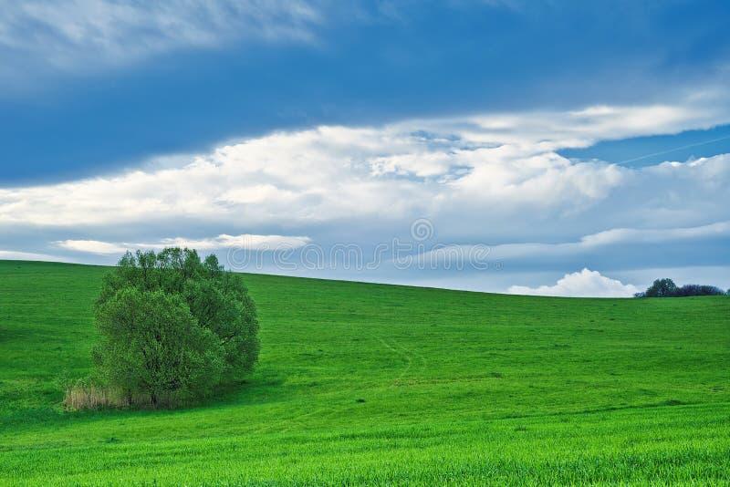 Paesaggio con l'albero immagini stock libere da diritti
