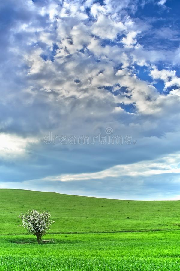 Paesaggio con l'albero fotografie stock libere da diritti