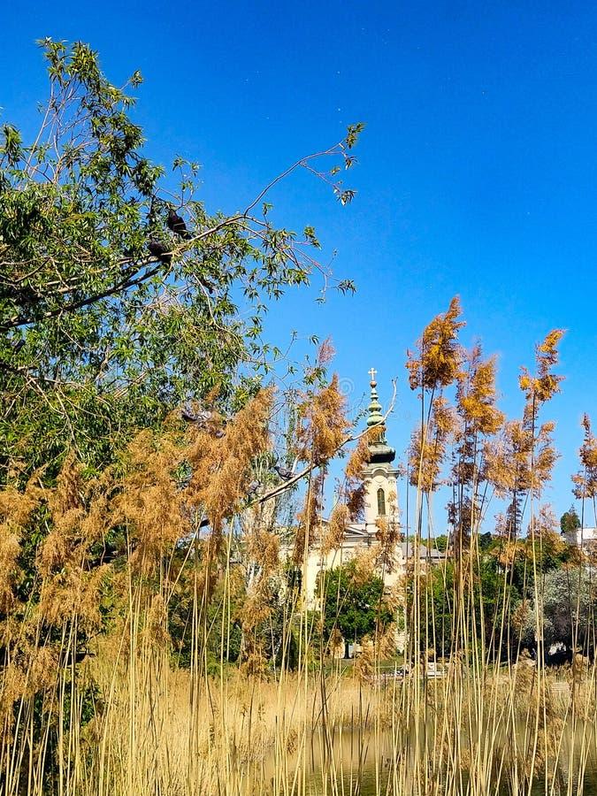 Paesaggio con la canna e la chiesa fotografia stock libera da diritti