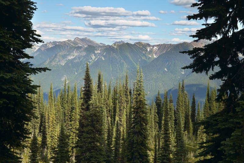 Paesaggio con la foresta in Columbia Britannica Supporto Revelstoke latta fotografie stock