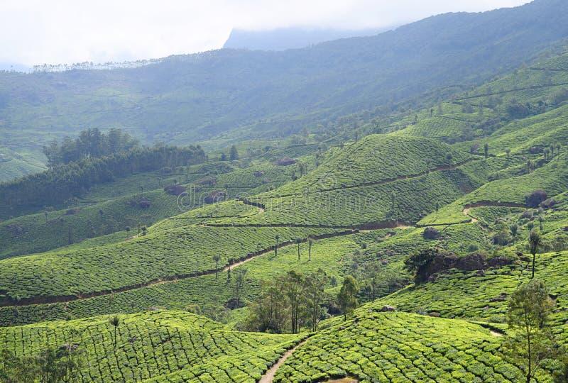 Paesaggio con le colline verdi, i giardini di tè e la bellezza naturale in Munnar, Idukki, Kerala, India immagini stock