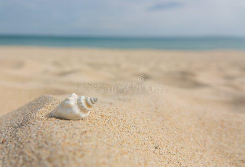 Paesaggio con le coperture sulla spiaggia tropicale Conchiglia alta vicina sulla spiaggia sabbiosa Fondo di estate immagini stock