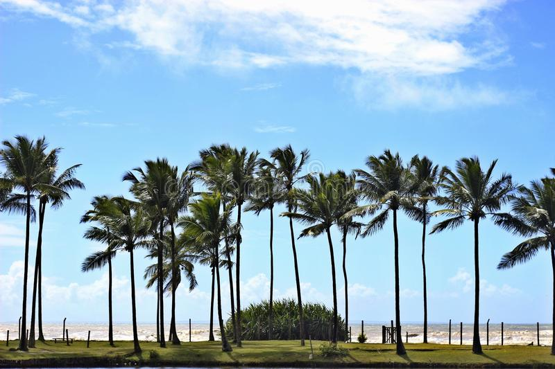 Paesaggio con le palme fotografie stock libere da diritti
