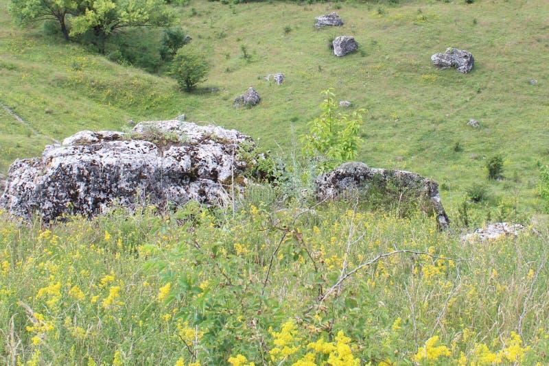 Paesaggio con le pietre e gli alberi fotografia stock libera da diritti
