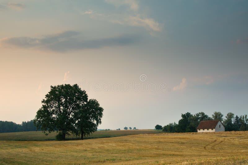 Paesaggio con le querce fotografia stock libera da diritti