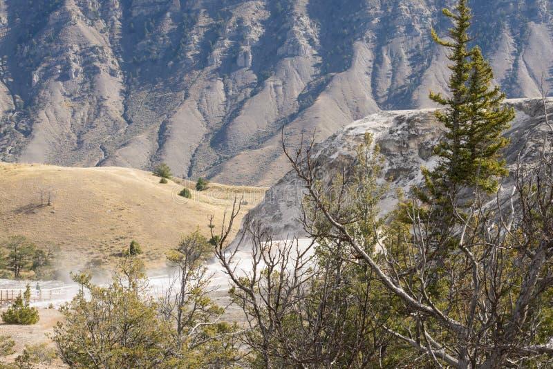 Paesaggio con le scogliere del travertino e del passaggio pedonale, parco nazionale di Mammoth Hot Springs, Yellowstone fotografia stock