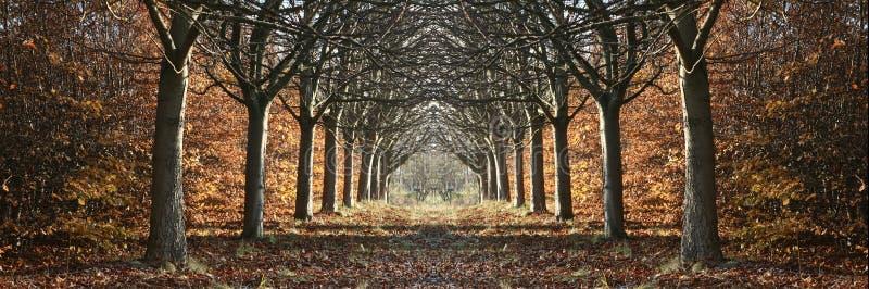 Paesaggio danese fotografie stock libere da diritti
