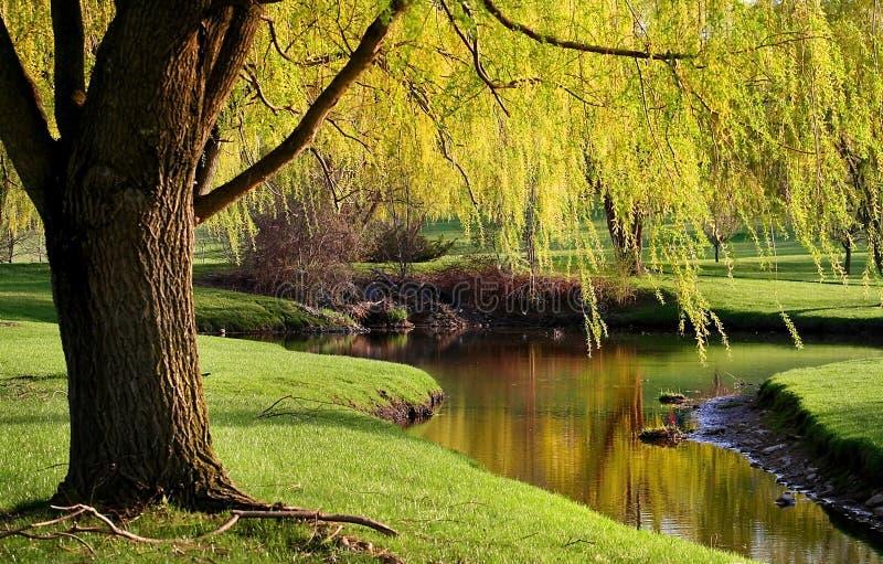 Paesaggio degli alberi di salice immagini stock