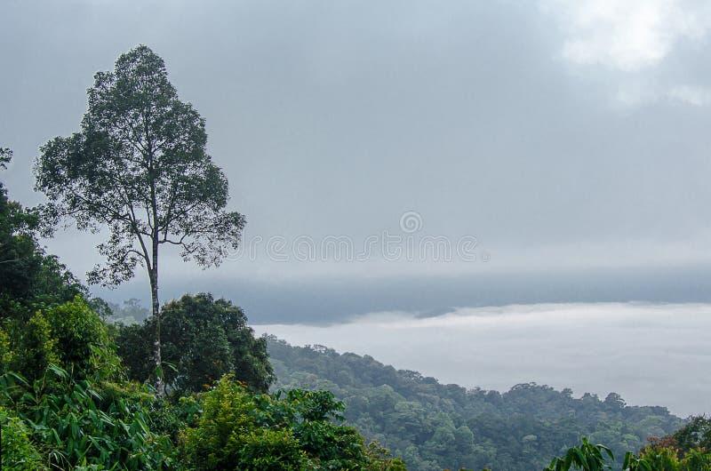 Paesaggio degli alberi sulla montagna Priorità bassa della sfuocatura immagini stock libere da diritti