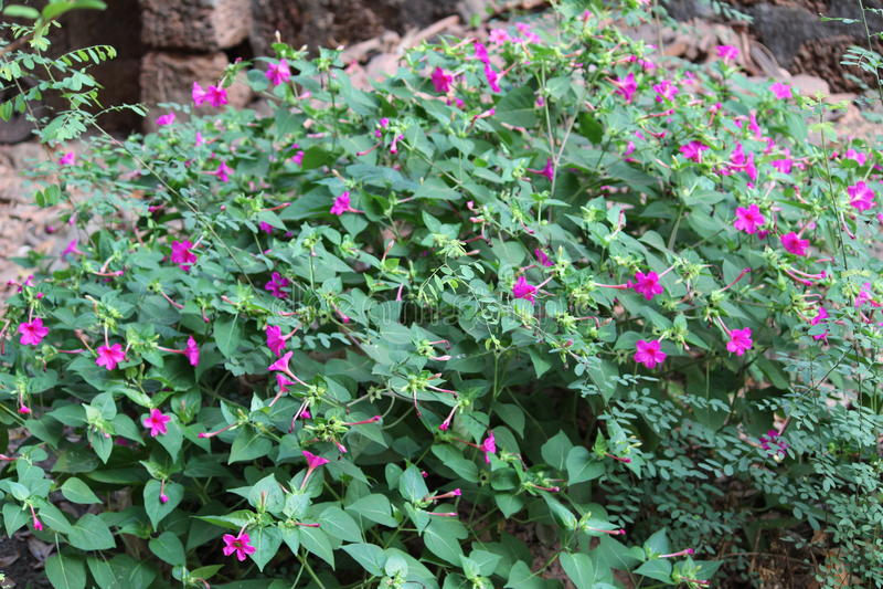 Paesaggio dei fiori fotografia stock