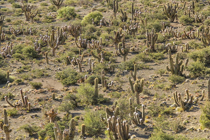 Paesaggio del cactus fotografia stock libera da diritti