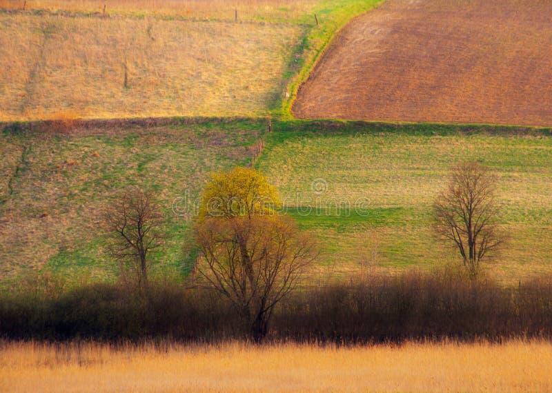 Paesaggio del campo fotografie stock libere da diritti